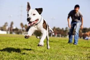 Relieve bar exam stress with a pet